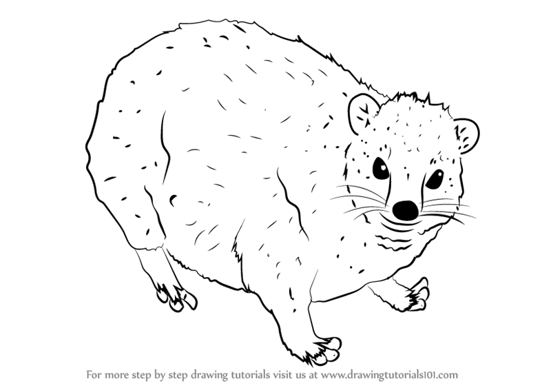 Learn How to Draw a Dassie Other Animals Step by Step