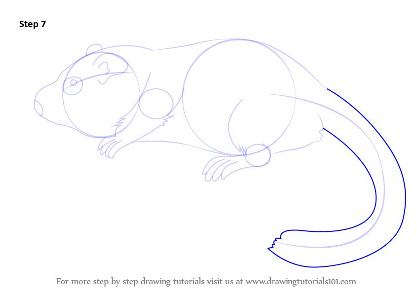 how to draw a shrew