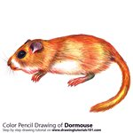 How to Draw a Dormouse