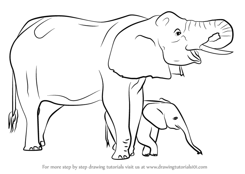 Learn How To Draw An Elephant Mother And Baby Other Animals Step