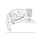 How to Draw an Emperor Tamarin