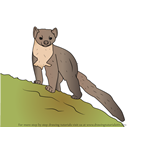How to Draw a European pine marten
