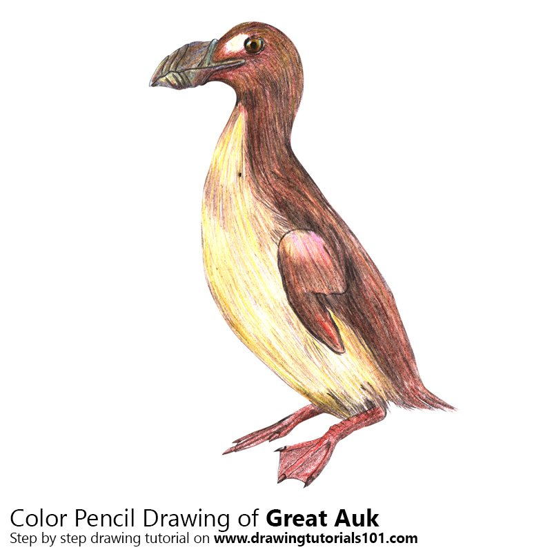 Great Auk Color Pencil Drawing