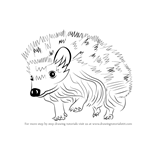 How to Draw a Hedgehog