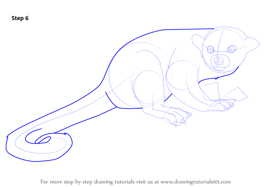 Step Draw Kinkajou Drawingtutorials