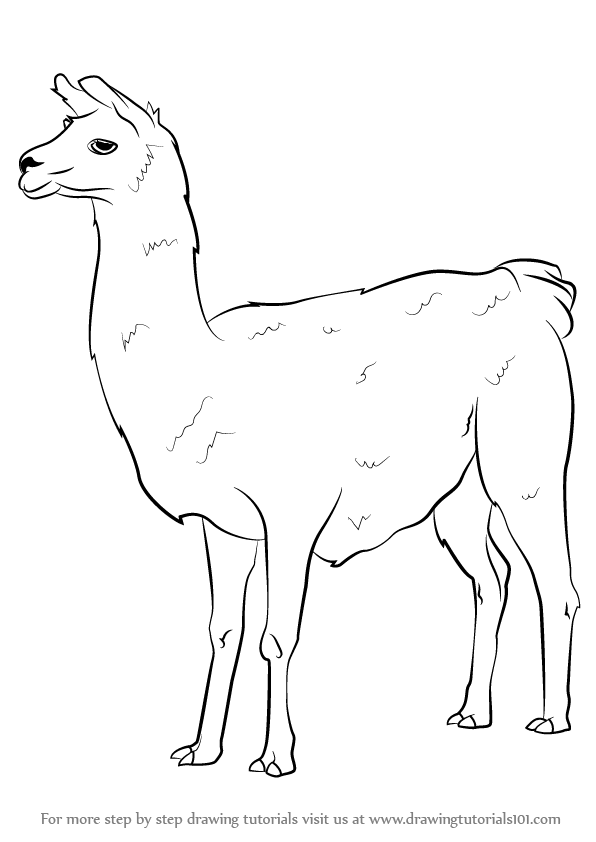 Line Drawing Llama : Learn how to draw a llama other animals step by