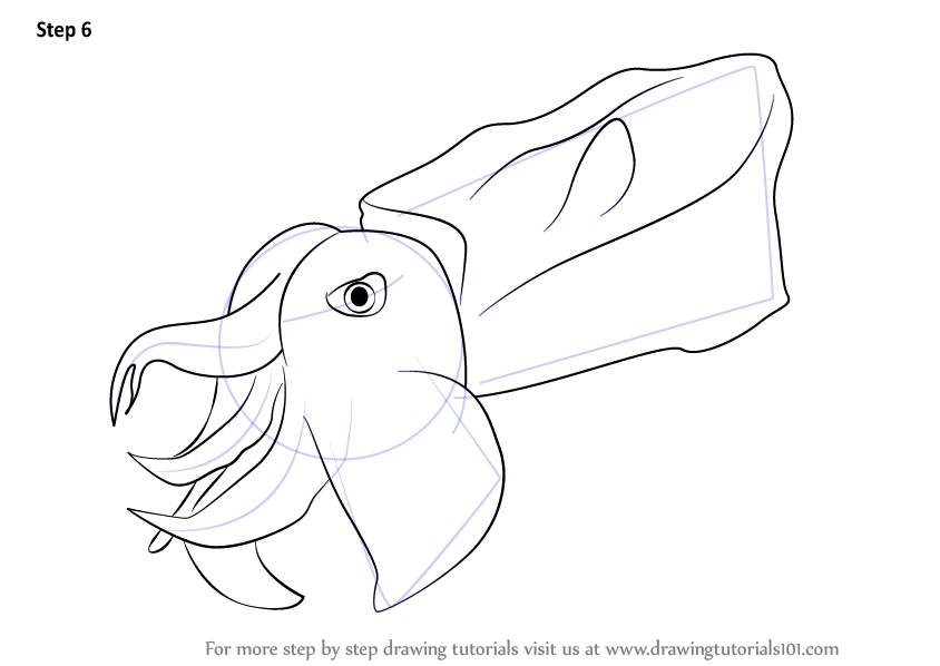 learn how to draw a pfeffer u0026 39 s flamboyant cuttlefish  other