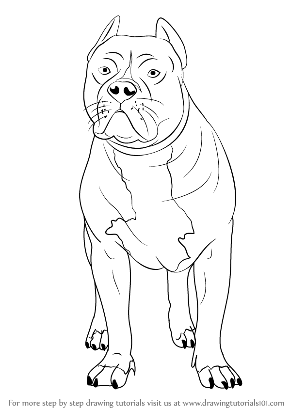 learn how to draw a pitbull other animals step by step drawing tutorials