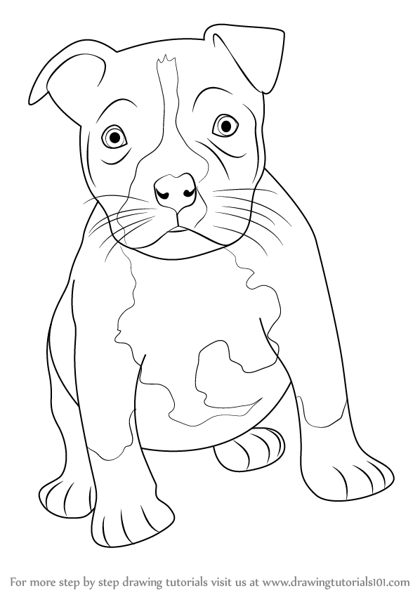 learn how to draw a pitbull puppy other animals step by step drawing tutorials