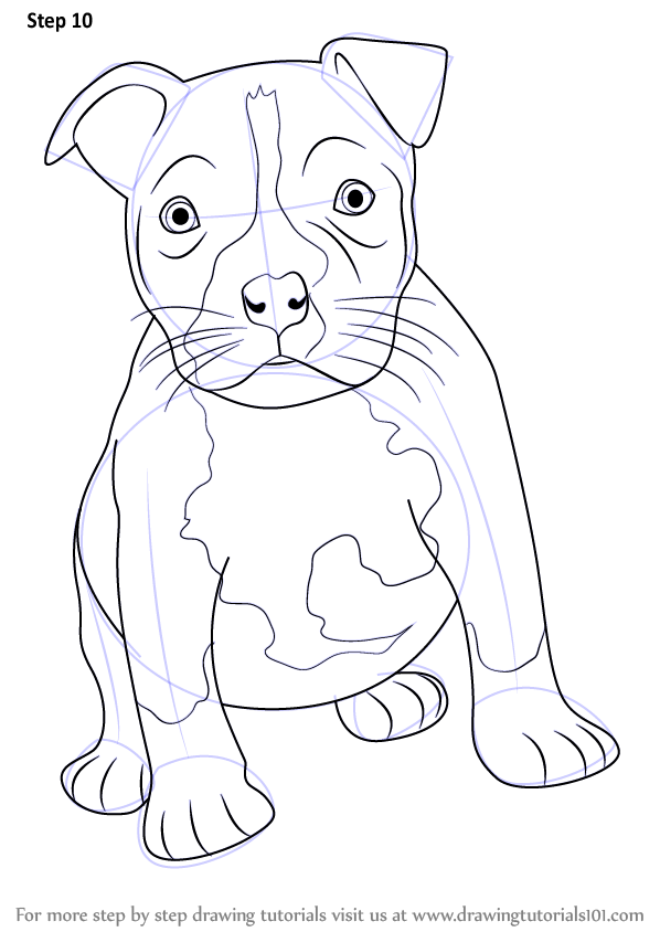 Learn How To Draw A Pitbull Puppy Other Animals Step By