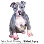How to Draw a Pitbull puppy