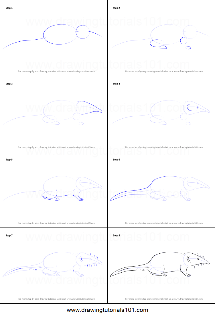 How to Draw a Pygmy Shrew printable step by step drawing ...