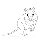 How to Draw a Quokka