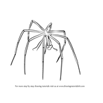 How to Draw a Sea-Spider