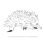 How to Draw a Spiny Anteater