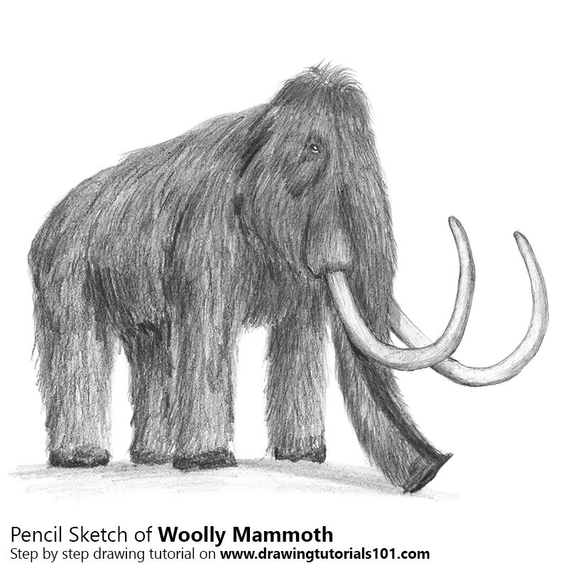 Pencil Sketch of Woolly mammoth - Pencil Drawing
