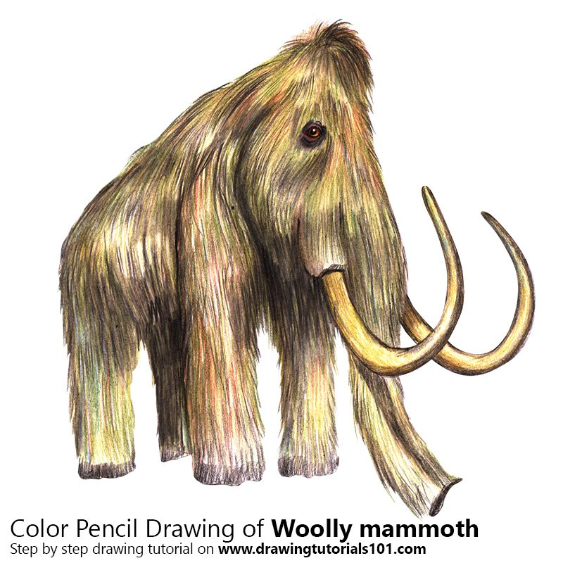 Woolly mammoth Color Pencil Drawing