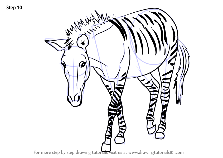 learn how to draw a zonkey  other animals  step by step