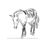 How to Draw a Zonkey