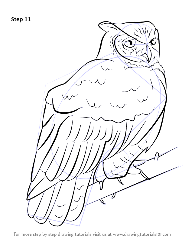 learn how to draw a great horned owl owls step by step