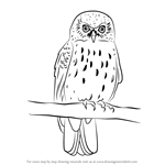 How to Draw a Morepork