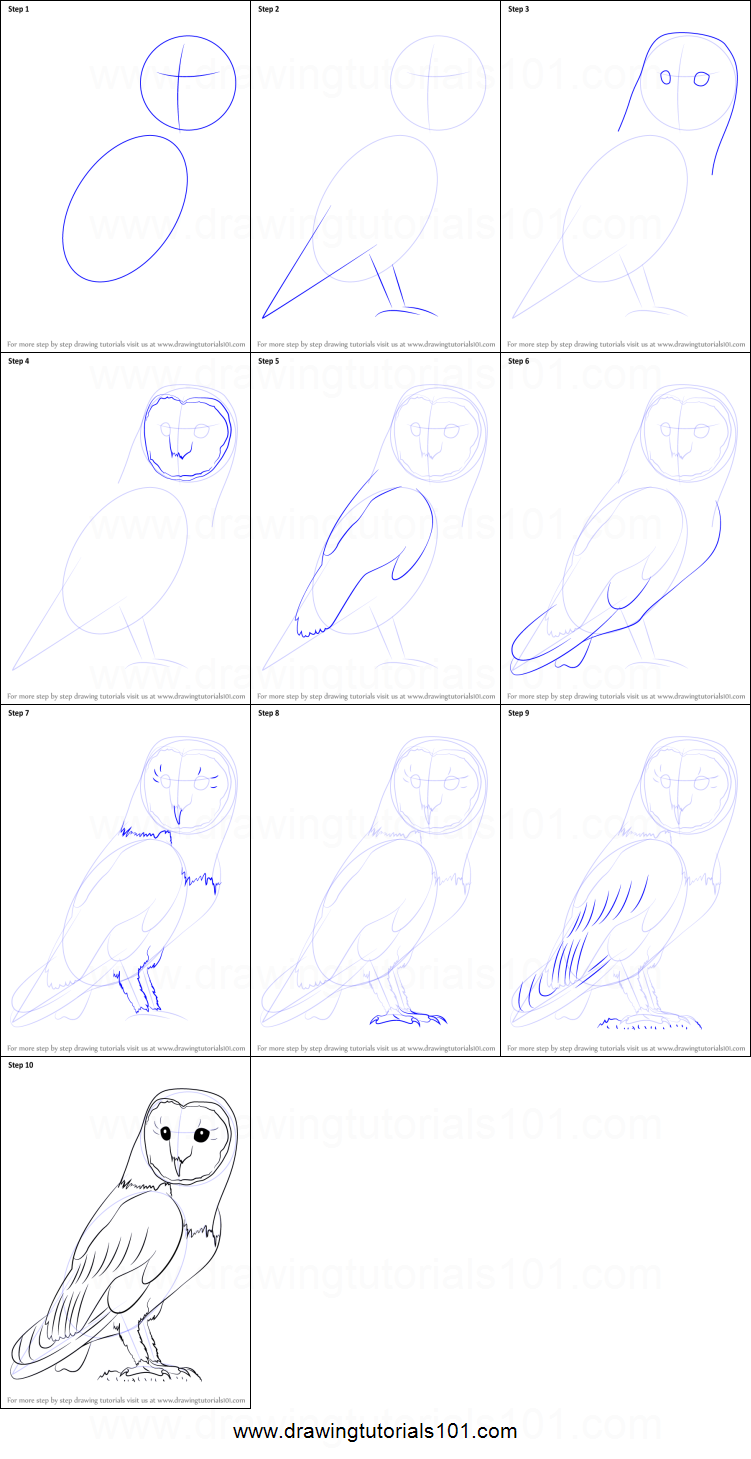 How to draw an owl printable step by step drawing sheet for Steps to draw an owl