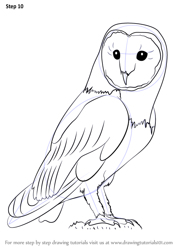 Learn how to draw an owl owls step by step drawing for Owl beak drawing