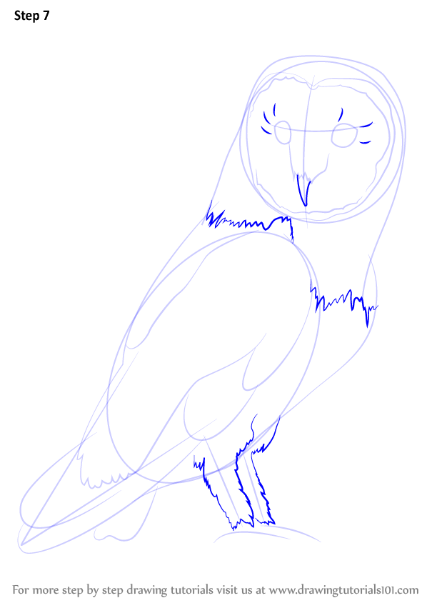 Learn How To Draw An Owl (Owls) Step By Step : Drawing