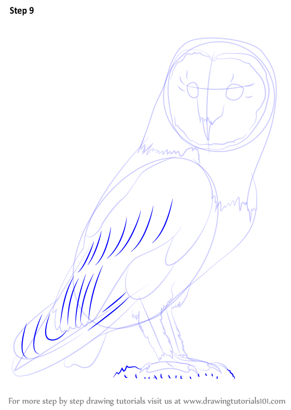 how to draw a snowy owl step by step
