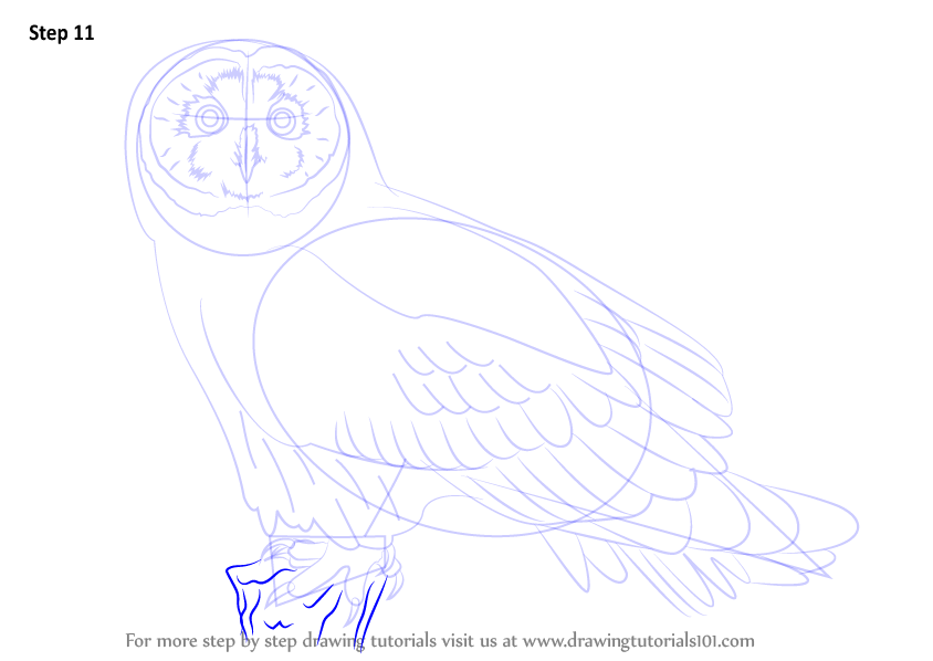 Learn how to draw a short eared owl owls step by step for Draw an owl in two steps