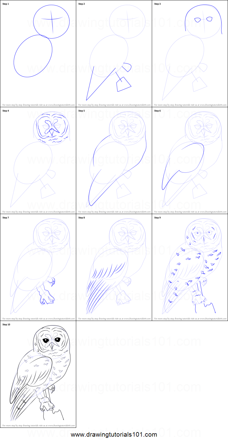 Step by step drawing tutorial on how to draw a spotted owl