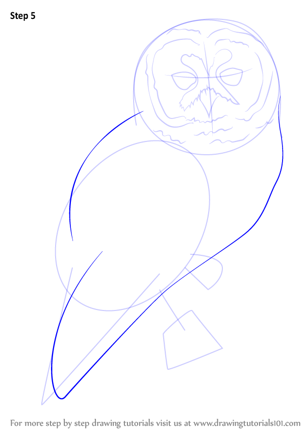 Learn How to Draw a Spotted Owl