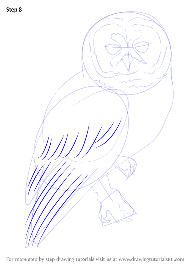 Learn How To Draw A Spotted Owl (Owls) Step By Step
