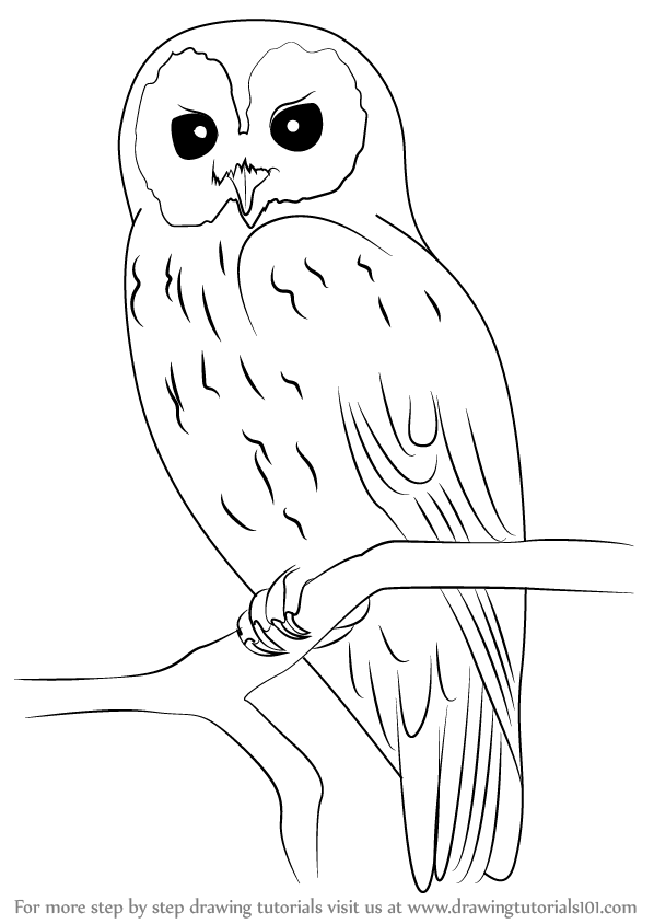 Learn how to draw a tawny owl owls step by step drawing tutorials