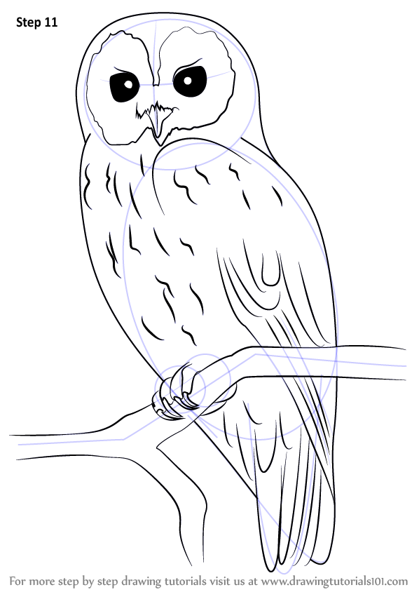 Learn How to Draw a Tawny Owl Owls