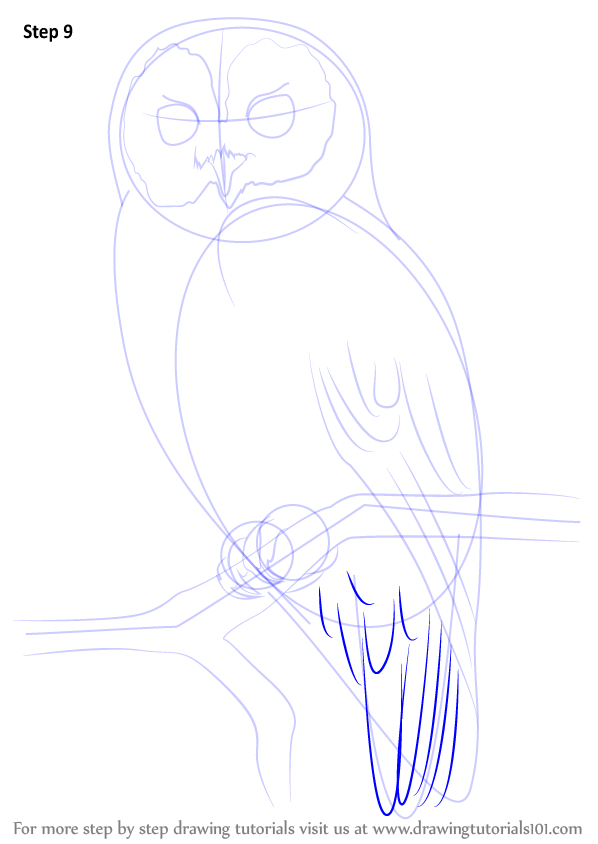 How To Draw Tawny Owl Step Drawing Anime By