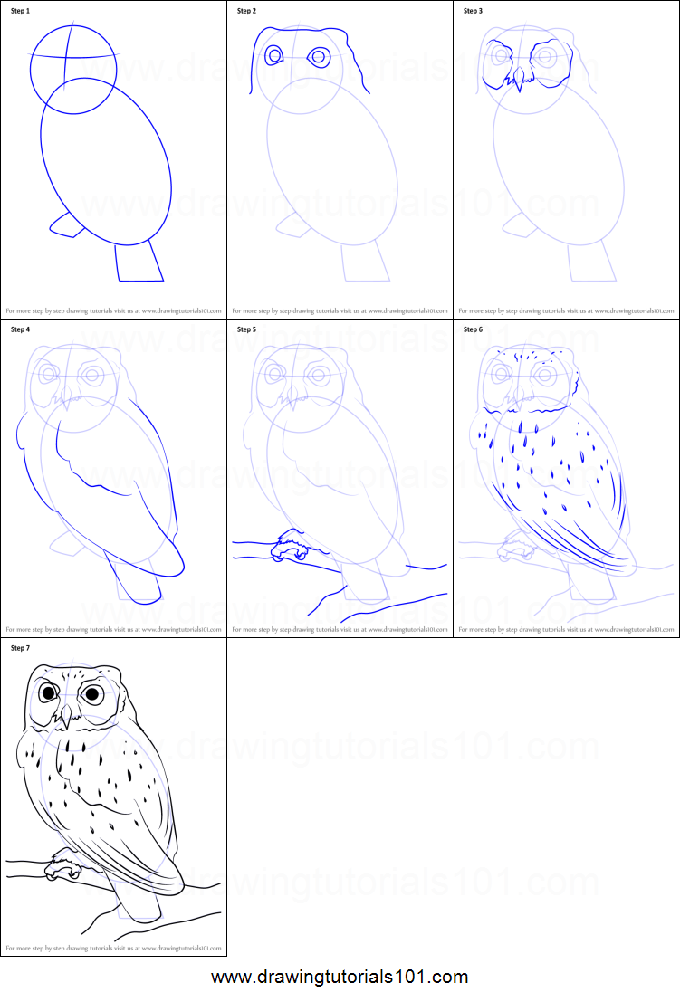 How to draw a western screech owl printable step by step for Draw an owl in two steps