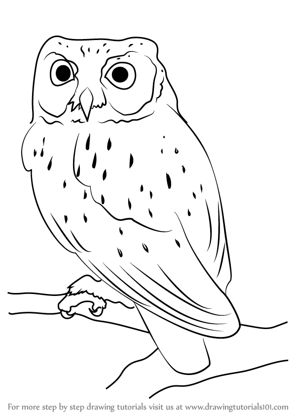 Learn how to draw a western screech owl owls step by for Draw the owl