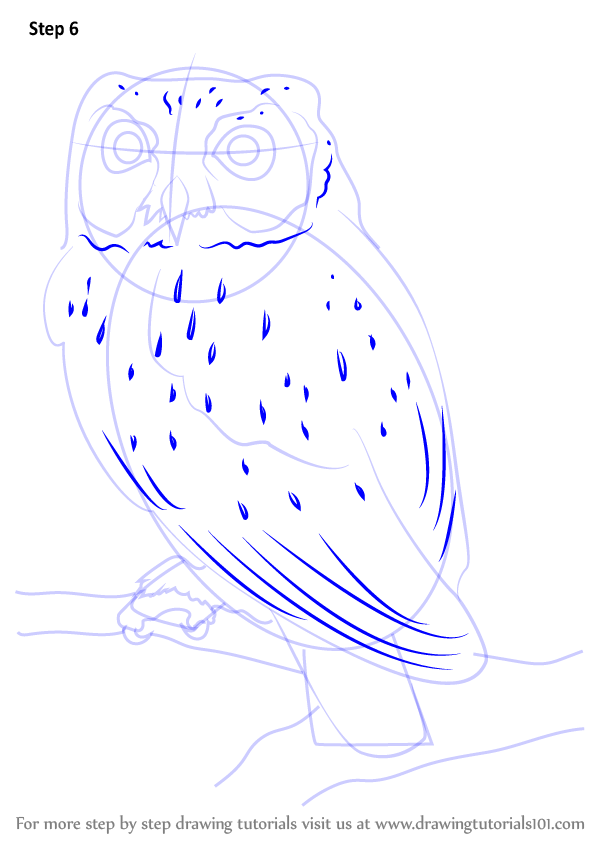 Learn How To Draw A Western Screech Owl (Owls) Step By