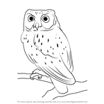 How to Draw a Western Screech Owl