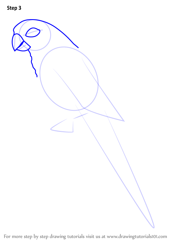 Learn How to Draw a Greencheeked parakeet Parrots Step
