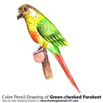 How to Draw a Green-cheeked parakeet
