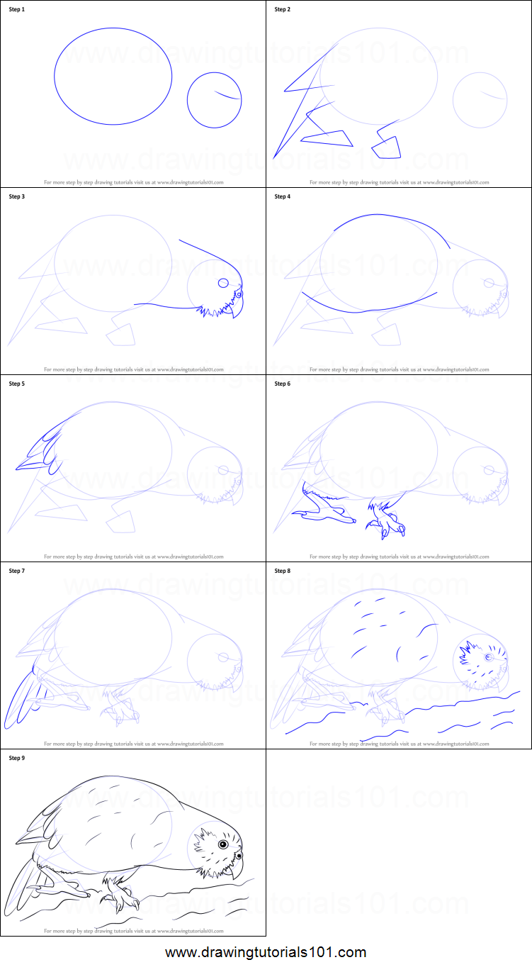 How to Draw a Kakapo printable step by step drawing sheet ...