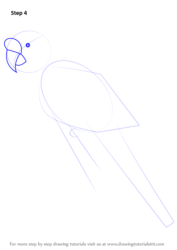 macaw drawing step by step - photo #42