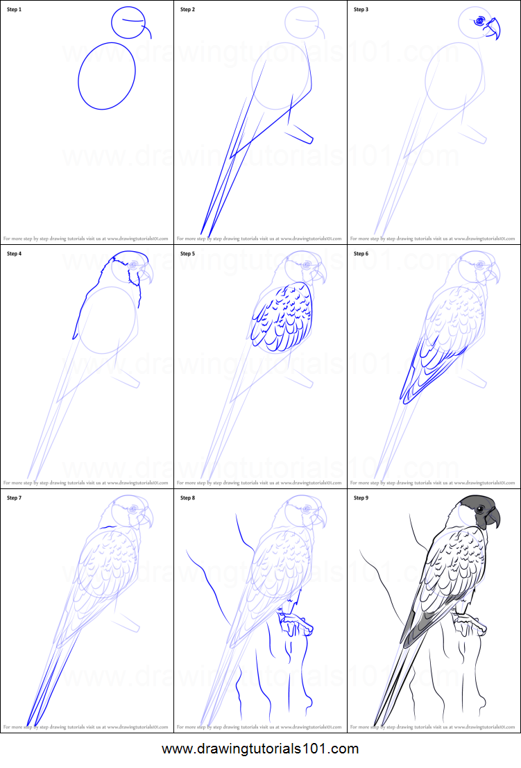 How to draw a nanday parakeet printable step by step for How to make doodle art