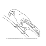 How to Draw a Kaka
