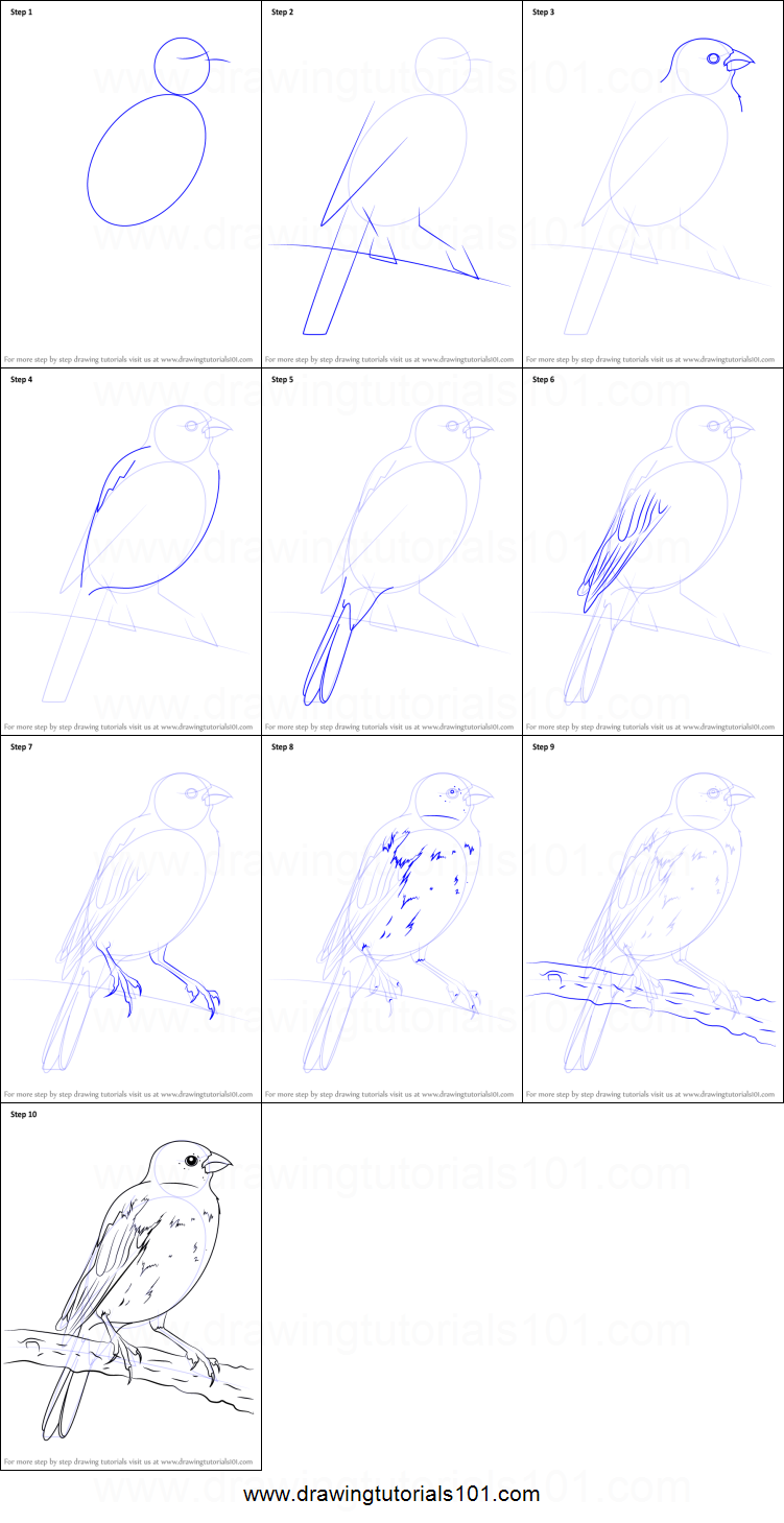 Step By Step Decorating Living Room: How To Draw A Parakeet Printable Step By Step Drawing