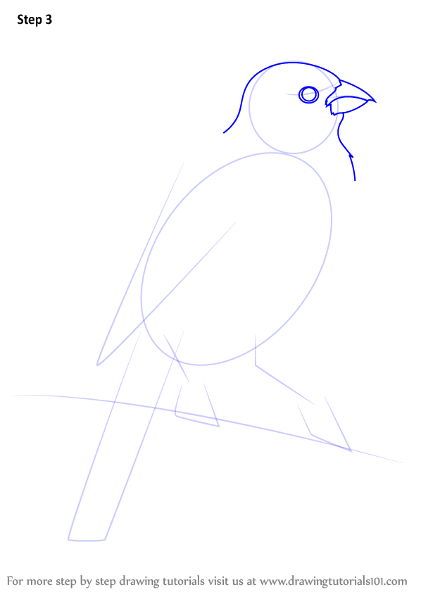 how to draw a macaw step by step