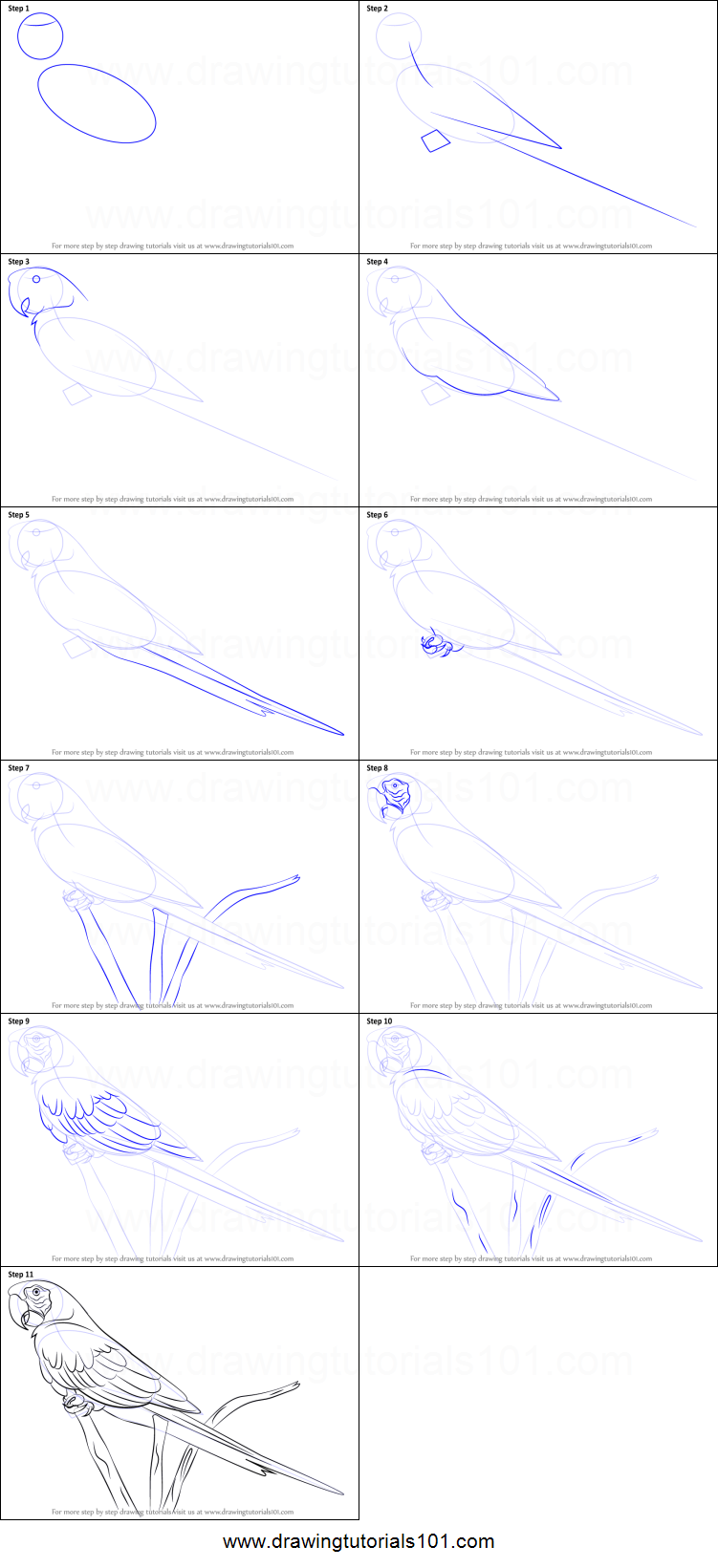 macaw drawing step by step - photo #22