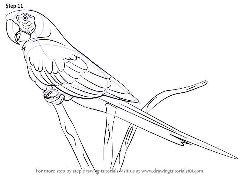 Learn How to Draw a Scarlet Macaw